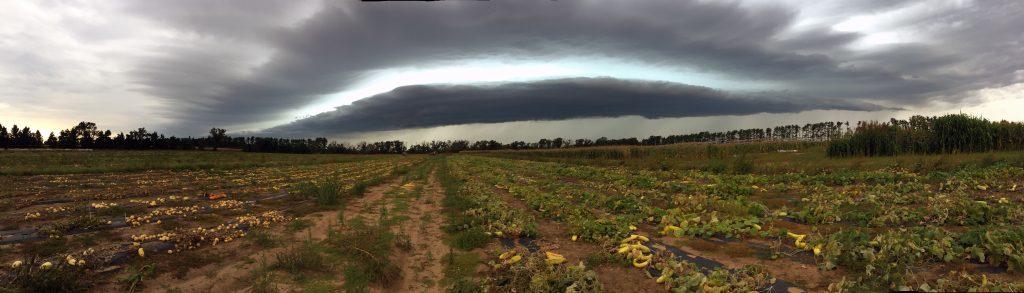 fieldstorm